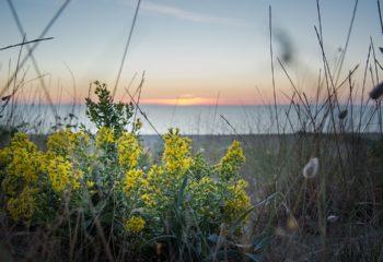 1080px-La_verga_d'oro_al_tramonto