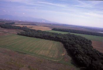 BOschi in Coltano