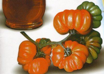 Pomodori Pisanello e Canestrino