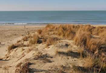 dune - Tenuta di San Rossore