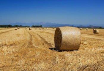 zona agricola