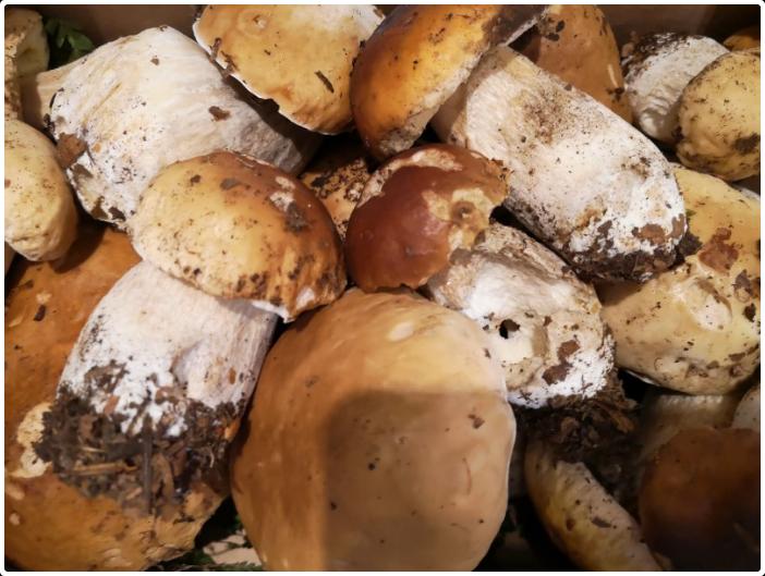Nel Parco spuntano i funghi autunnali