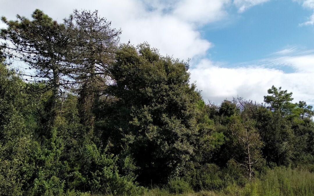 Macchia Lucchese, si piantano 3400 alberi