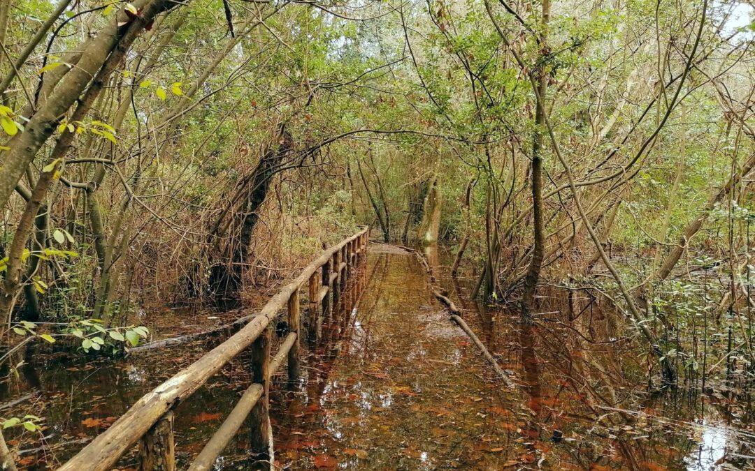 Passeggiata nei boschi allagati