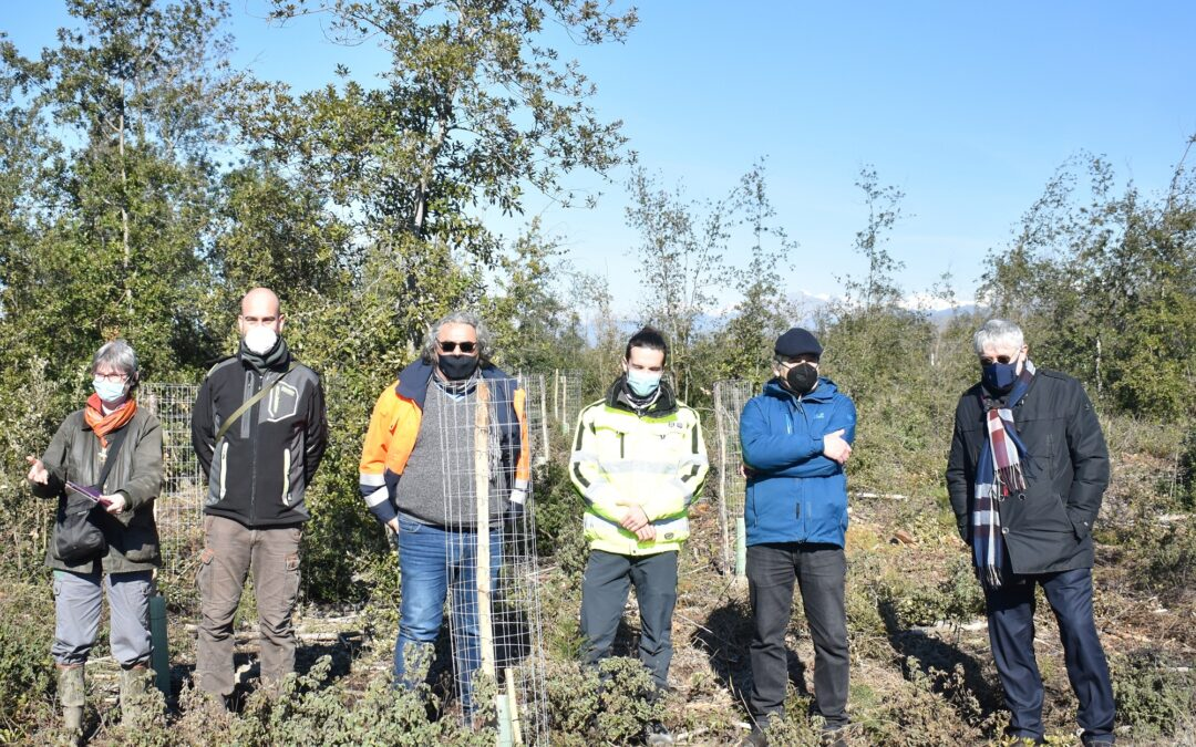 Macchia Lucchese: 3400 nuovi alberi