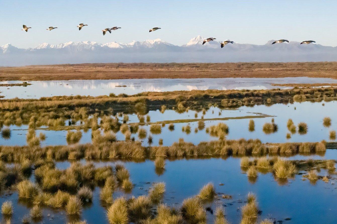Risanare il lago di Massaciuccoli