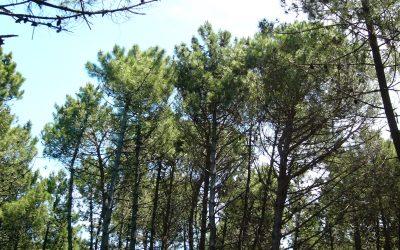 Pulizia del bosco della Lecciona