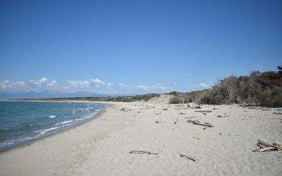 Pulizia della spiaggia del Gombo